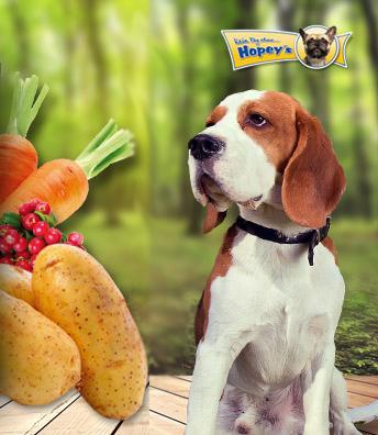 gemuse-obst-hund