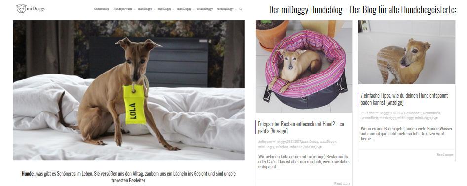 miDoggy: Ein Hundeblog zum Mitmachen